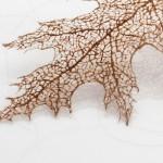 Вышивка из человеческих волос от Жанин Шереос (Jenine Shereos)