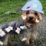 Вышитая летняя панамка для собаки